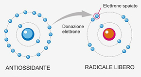 Moleca anti-ossidante